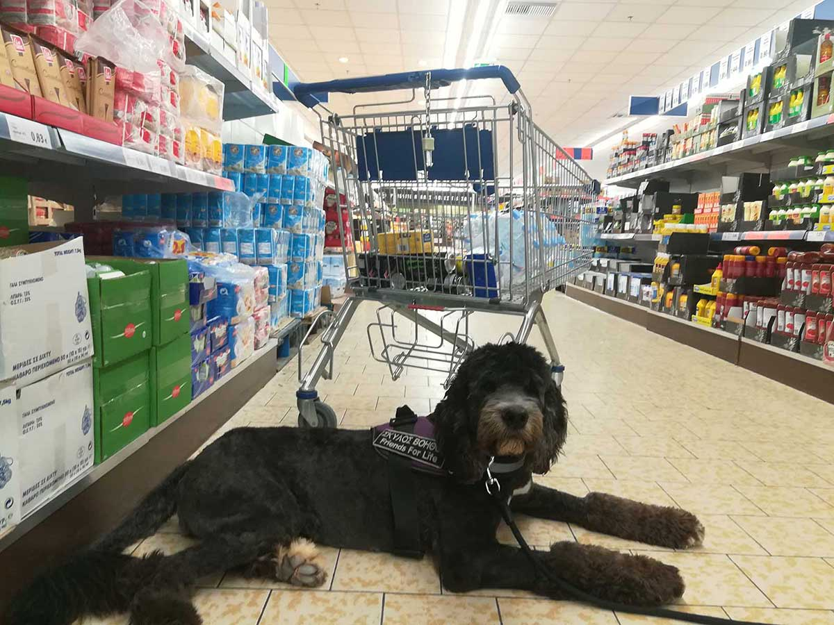 Σκύλος βοηθός στο supermarket