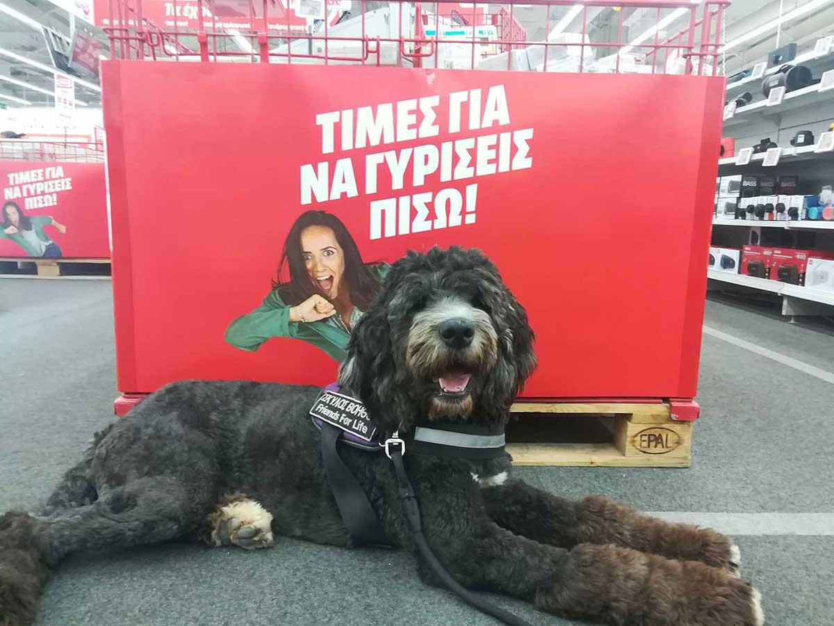 Σκύλος βοηθός σε κατάστημα