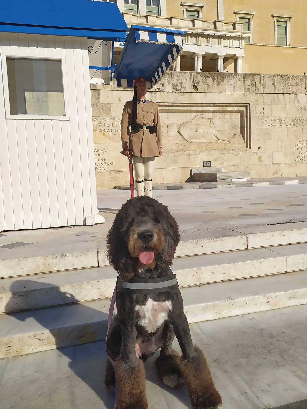 σκύλος βοηθός στο σύνταγμα