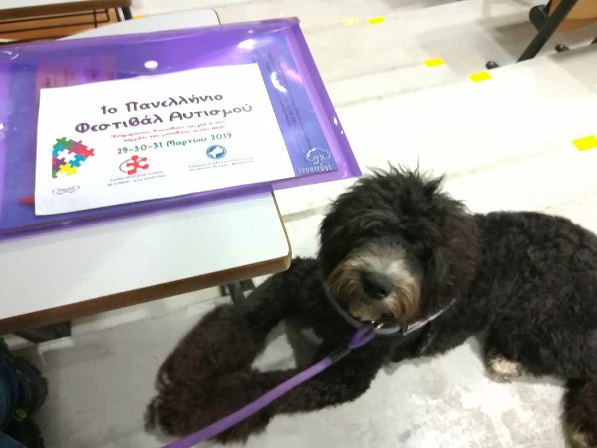 Σκύλος βοηθός σε συνέδριο για τον αυτισμό