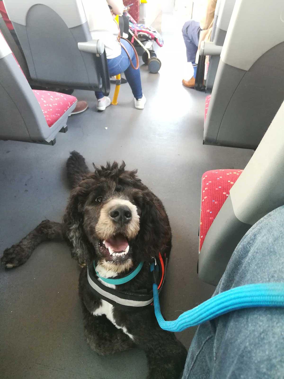 Σκύλος βοηθός στο λεωφορείο