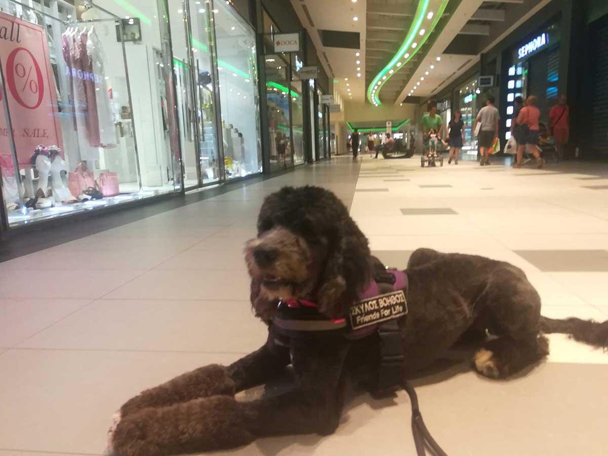Σκύλος βοηθός σε εμπορικό κέντρο