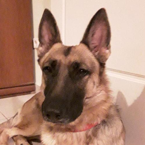 Σκύλοι Βοηθοί Neda